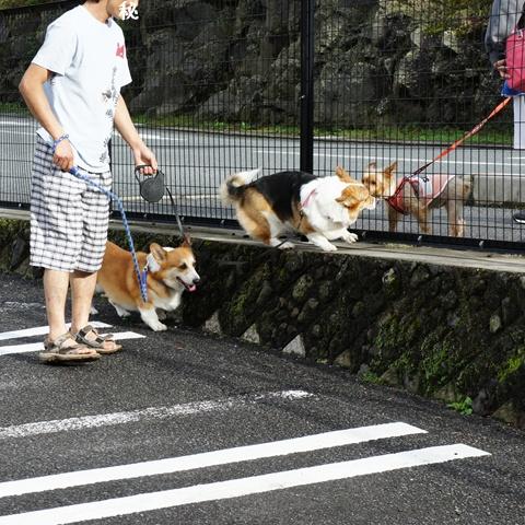 CAMPica 明野ふれあいの里【23.9.18-20(3日目)】 NO20