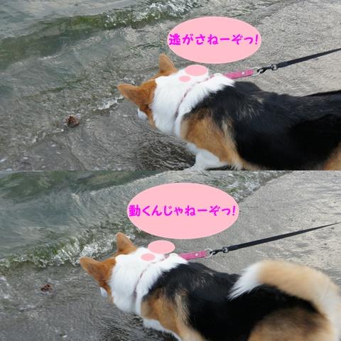 海の公園からのシーパラ【23.10.13】 NO5