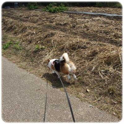 近所散歩♪【23.9.29】 NO7