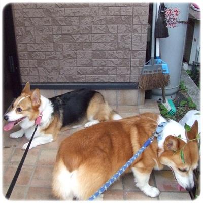 近所散歩♪【23.9.29】 NO11