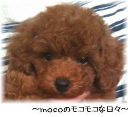 コピー (2) ~ moco