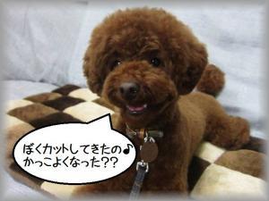 IMG_7058 - コピー