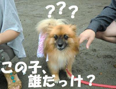 013繝シ繧ウ繝斐・繧ウ繝。繝ウ繝・convert_20110823064450