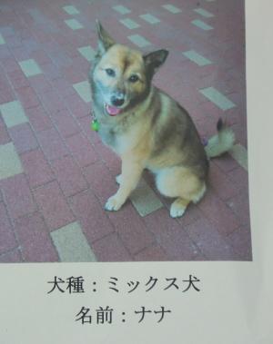 003繝シ繧ウ繝斐・_convert_20110823081452