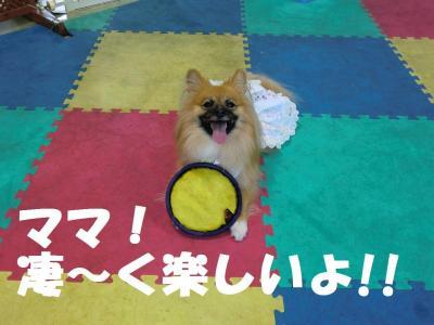 018繝シ繧ウ繝。繝ウ繝・convert_20110826213028