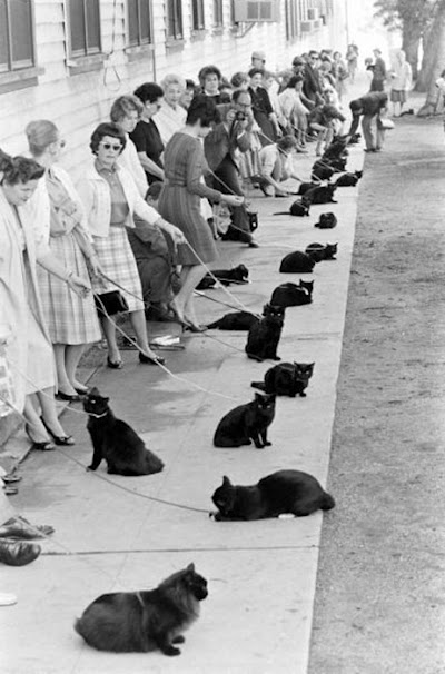 black-cat-audition.jpg