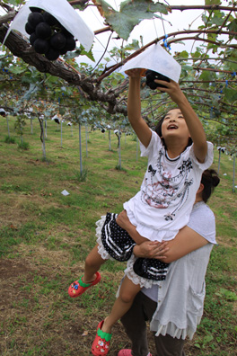 家族で果物狩り ぶどう狩り 新潟フルーツパーク