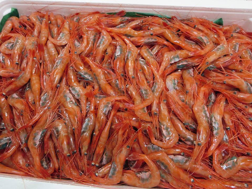 新潟の美味しい物 鮮度抜群のお魚 新潟 南蛮えび 甘えび