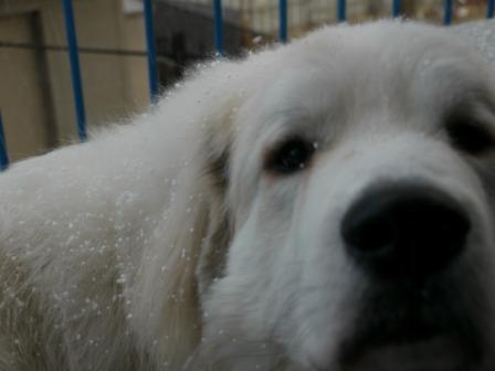 201202_雪2