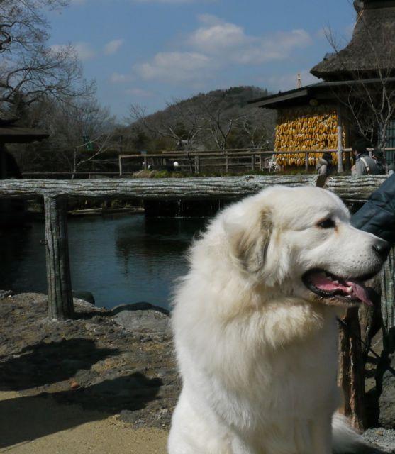 201204山中湖10忍野八海