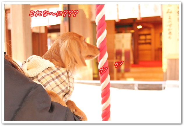 IMG_0221-1.jpg