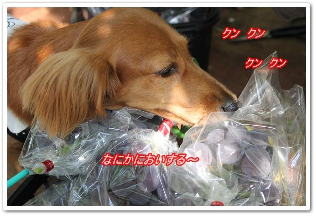 IMG_8042-1.jpg
