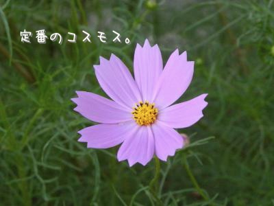 DSCN7849_convert_20110827205559.jpg