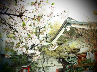 お宮さんに桜はよく似合いますね。