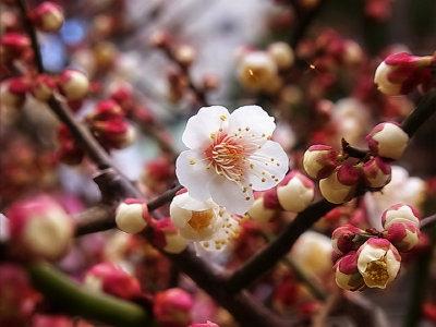 白い花は香りがよいですね。