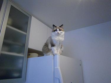 冷蔵庫のむしゅめ