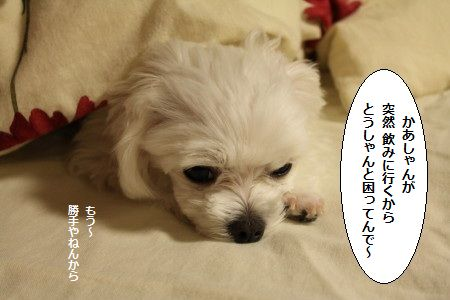 IMG_1531_1 かあ 1