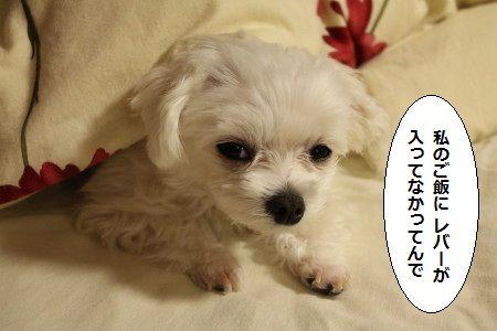 IMG_1540_1 ればー2
