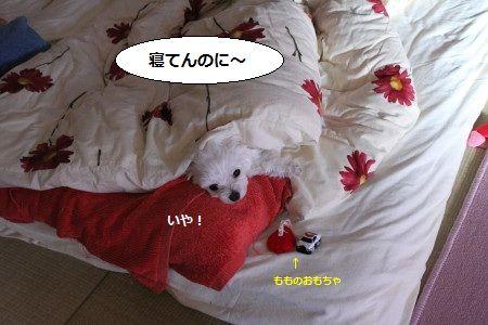 IMG_2208_1ねて1