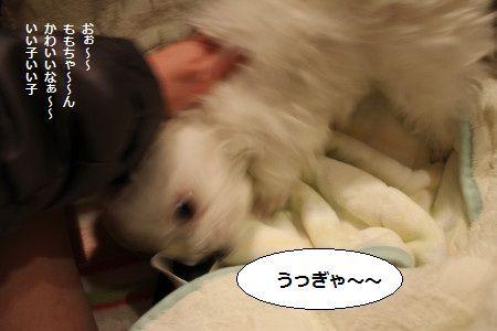 IMG_2596_1 ふおお 2