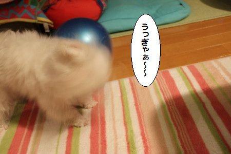 IMG_3043_1 うbbぎゃ1