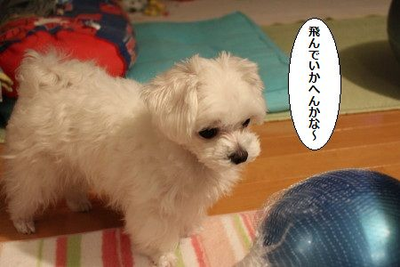 IMG_3050_1 なげ2