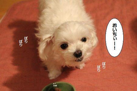 IMG_3267_1 おい1