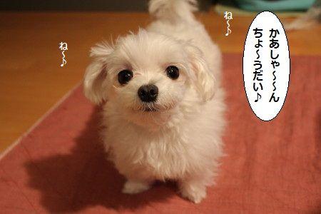 IMG_3294_1 かあ 1