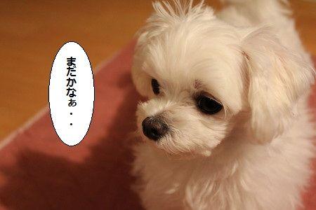 IMG_3304_1 けち1