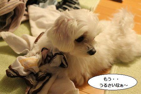 IMG_3473_1うる1