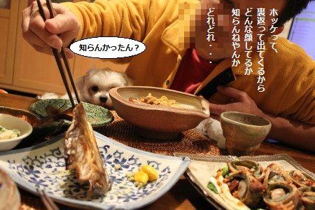 IMG_3644_1 いま1