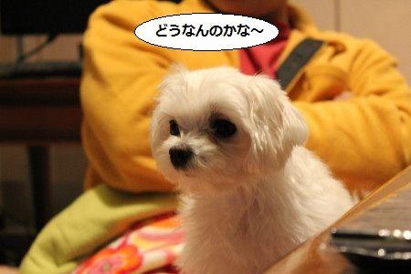 IMG_3653_1 どう1