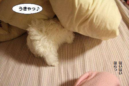 IMG_3888_1うきゃ1