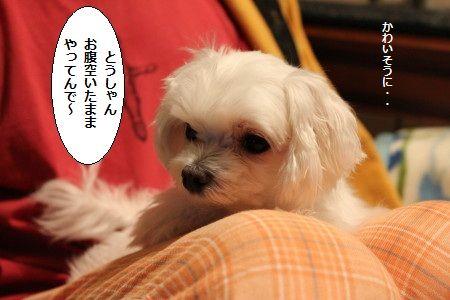 IMG_4119_1 とう3