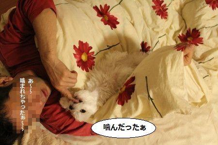 IMG_3505_1 かむ3