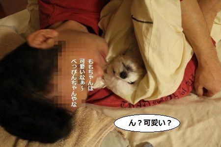 IMG_3519_1 べっぴん3