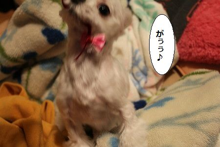 IMG_4329_1 ふんが 1