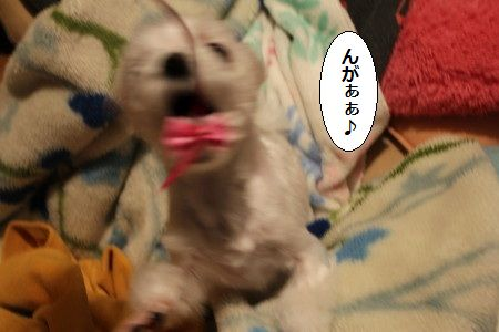 IMG_4333_1がぁぁ1