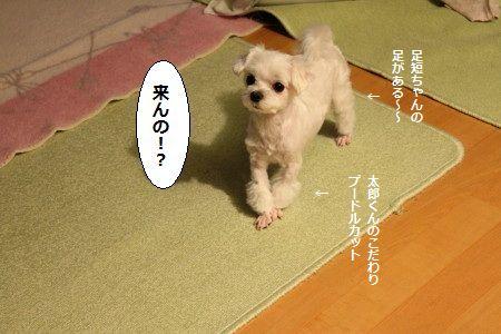 IMG_4339_1 くる1