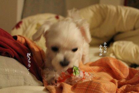 IMG_4505_1 ふがっ!1