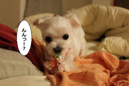IMG_4506_1 えっ1