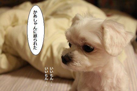 IMG_4521_1 かあ1