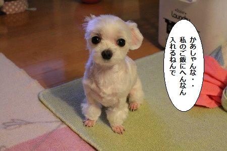 IMG_4459_1 ごはん1