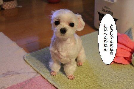 IMG_4460_1 おも1