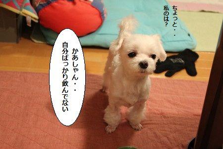 IMG_4543_1 かあ 1