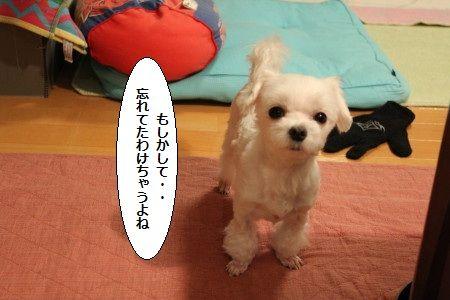 IMG_4544_1 わすれ 2