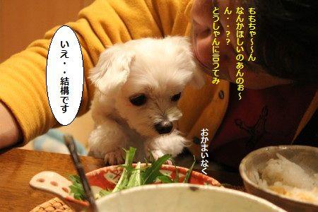 IMG_4603_1いえ1