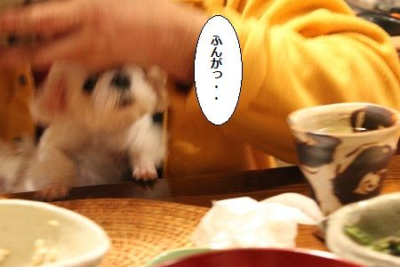 IMG_4626_1 ふんが5
