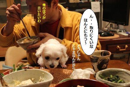 IMG_4633_1 とう6