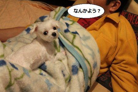 IMG_4637_1 どう6